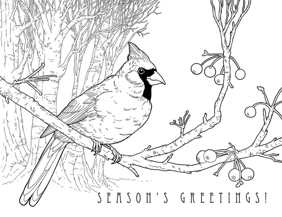 cardinal coloring pages - photo#7